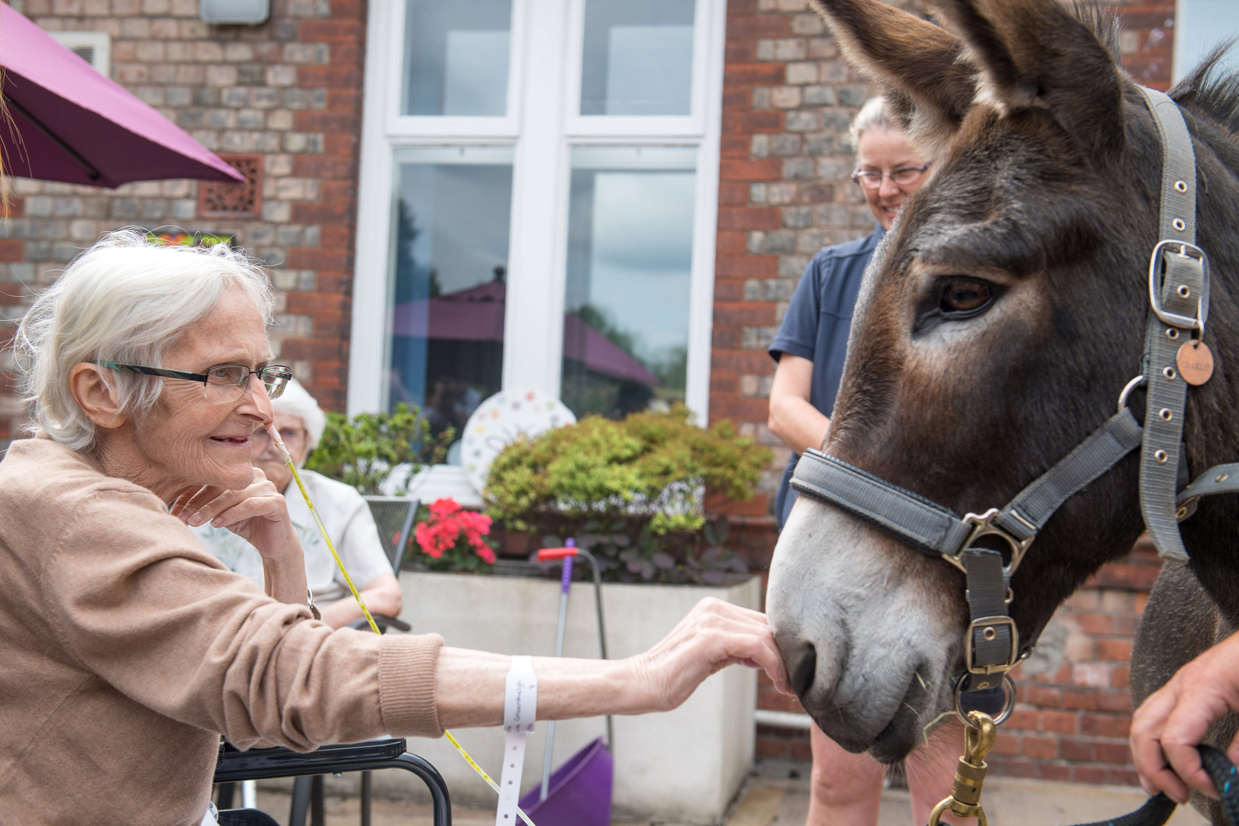A therapy donkey helps patients who have terminal illnesses.