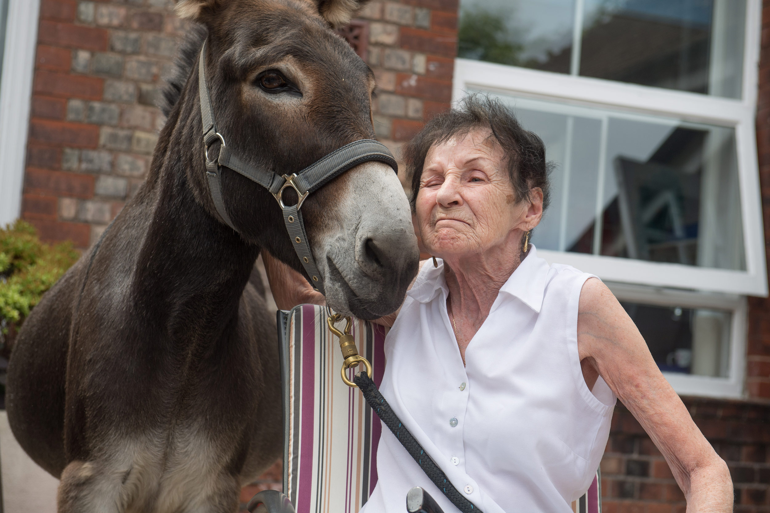 A therapy donkey visits patients at a hospice